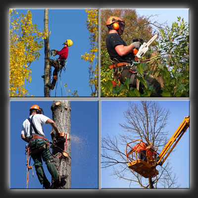 Peckham SE15 Tree Surgeons